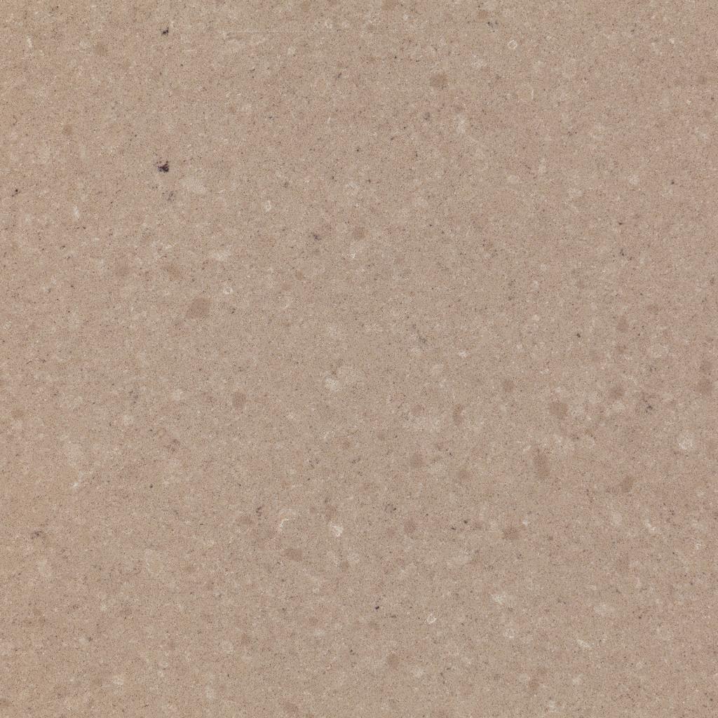 Index fossil ammonite dettaglio